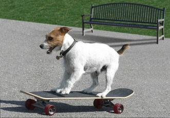 Hot_Dog_Skateboarder